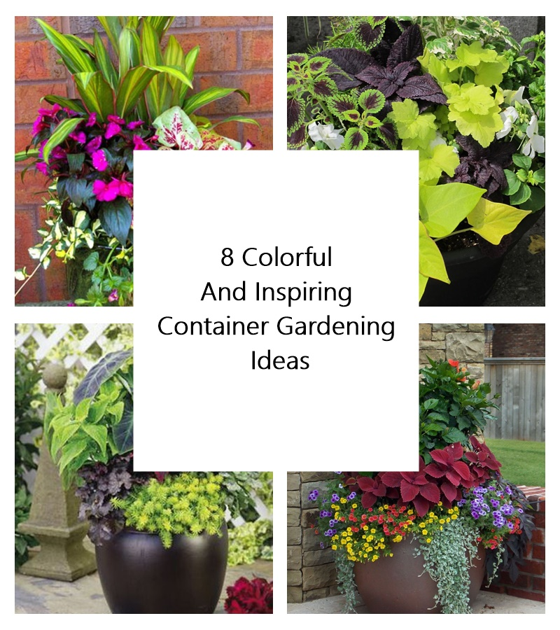 Container Garden Ideas: 8 Colorful And Inspiring Container Gardening Ideas