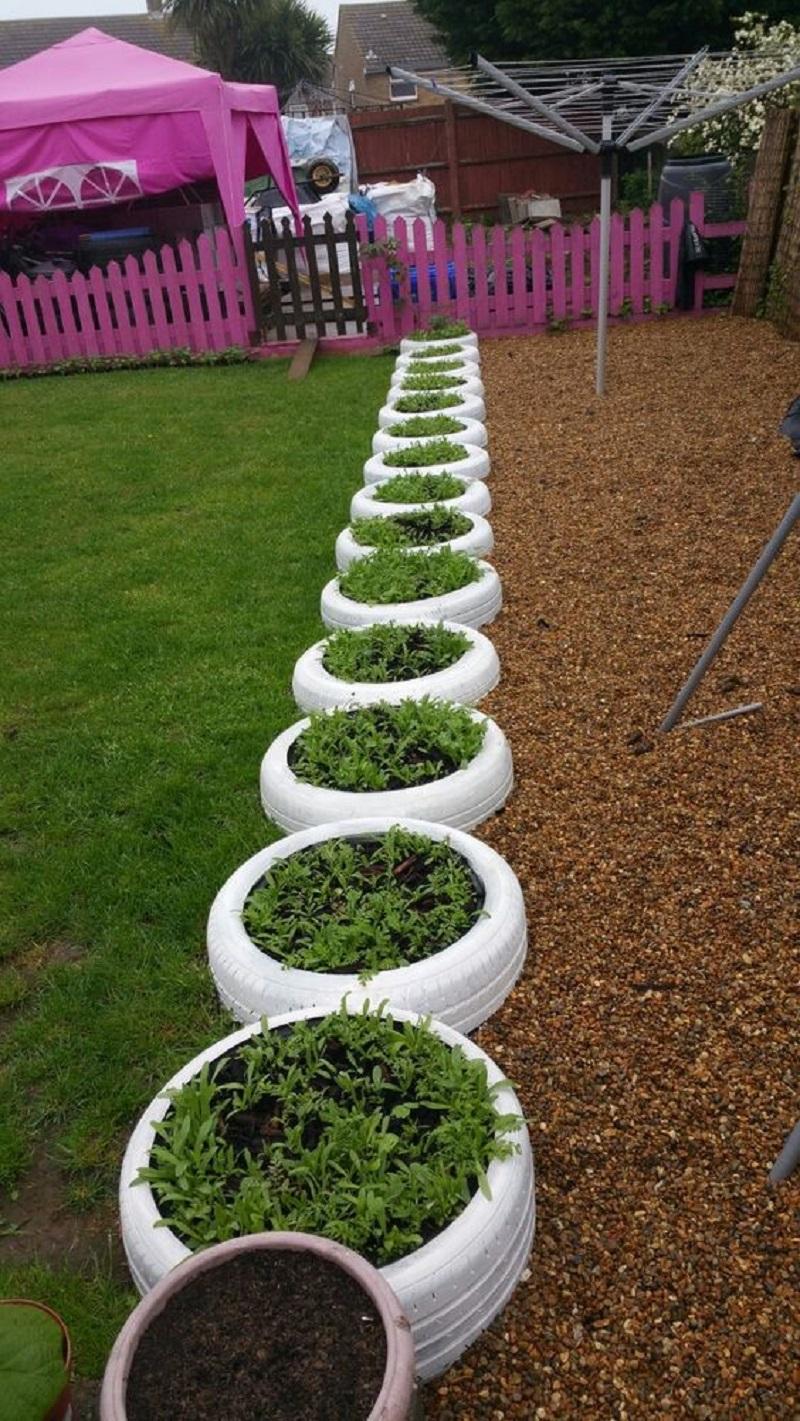 Tire Planter Border Line