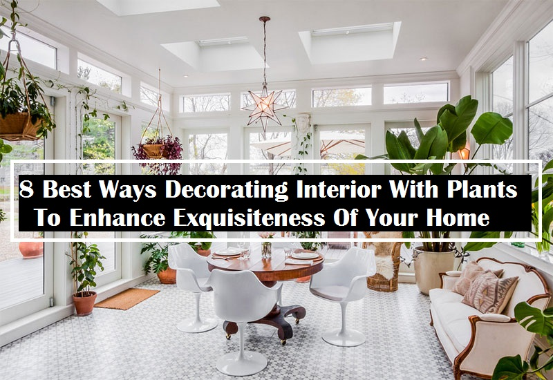8 Best Ways Decorating Interior With Plants To Enhance Exquisiteness Of Your Home