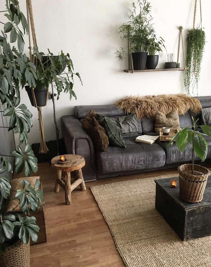 Go With Indoor Plants