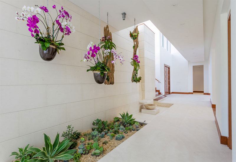 Plants To Decorate Hallways