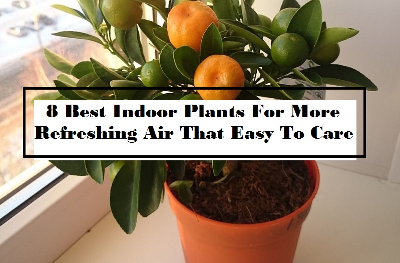 8 Best Indoor Plants For More Refreshing Air That Easy To Care