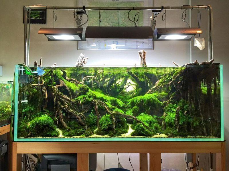 Here S How To Make 20 Great Aquarium Designs Talkdecor